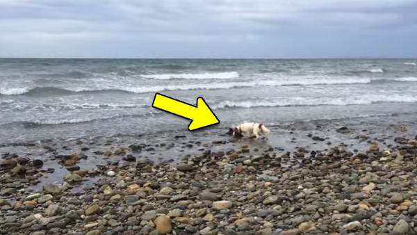 Hunden skällde i panik och han visste att han var tvungen att agera snabbt - då hittade han något oväntat